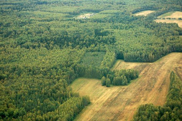 Леса спасут мир от углекислого газа